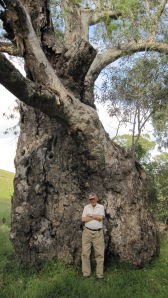 Dad and tree