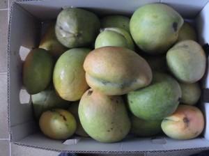 Mangoes 5