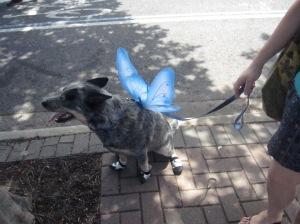 butterfly walk 6