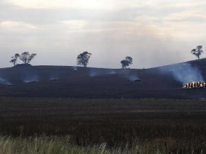 fire hay burning