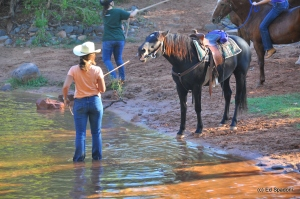 horse to water