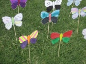 Close up of butterflies