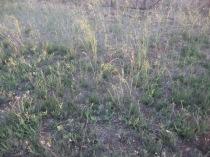 Light on grass