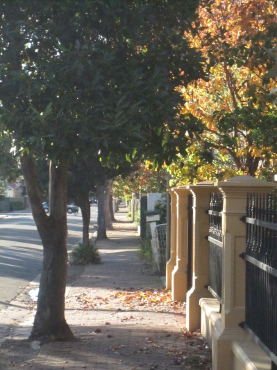 Autumn footpath featuring yellow