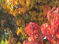Close up red/orange/yellow/hint of green