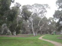 Path through the park