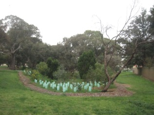 New tree plantings in the park