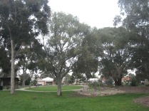 Another shot of trees in the park