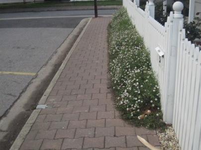 White little flowers...