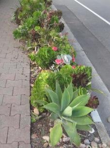 A succulent border
