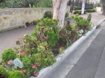 The succulents again