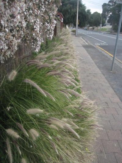 Grasses and jasmine