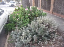 Shrubs beside a tree