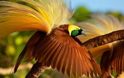 bird of paradise 1