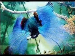 bird of paradise 14