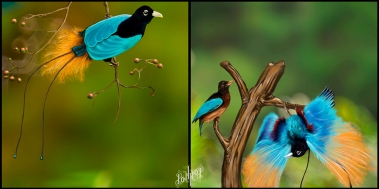 bird of paradise 15