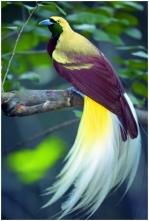 bird of paradise 16