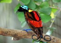 bird of paradise 2