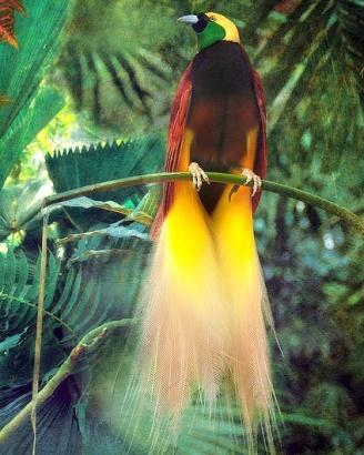bird of paradise 23