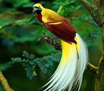 bird of paradise 6
