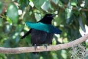 bird of paradise 7