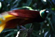 bird of paradise 8