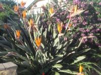 In a garden on Scarborough Street