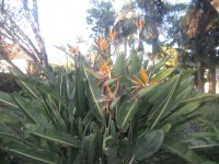 Large plant on Partridge St