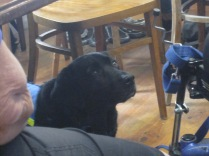 I sat behind this lovely assistance dog who was looking soulfully at her/his person