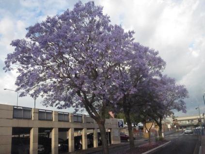Trees and petals beneath