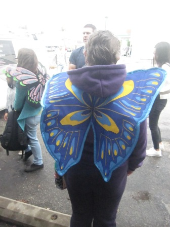 Shelley's butterfly wings