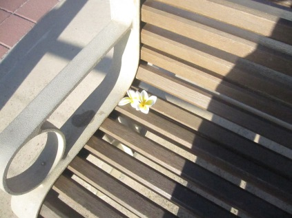 Frangipani flowers on a bench by the beach