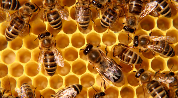 bees and hive