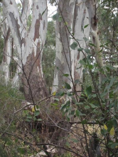 Some leaves 'in situ'