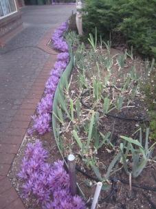 In someone's garden