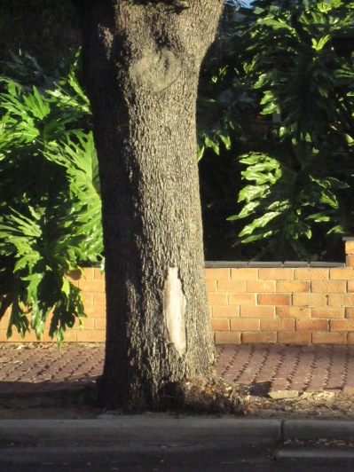 Evening light shining on the tree outside my place