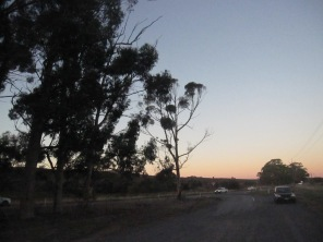 My car and the trees - the meeting point (it's getting close to sunset now)
