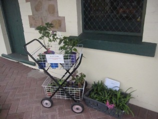 Pot plants in trolleys