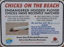 Sign from the internet about the plovers - there were quite a few of these along the beaches