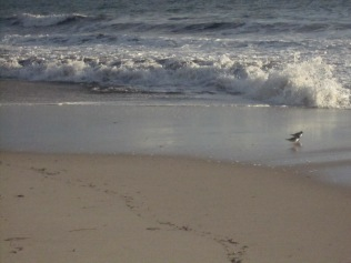 The two little birds were running along so quickly that I nearly missed getting them in the shot