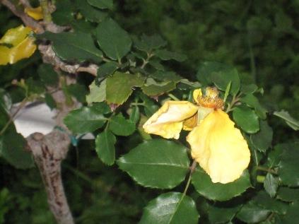 Yellow petals