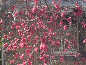 Pink blossom...