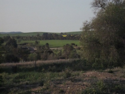 Looking east and back towards the new main road and bridge, plus yellow of canola crop
