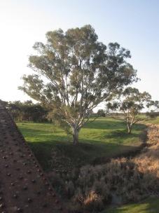 Tree north east of the bridge