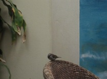 Sparrow in the cafe again