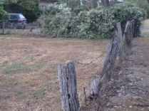 Old fence of Myrtle's paddock