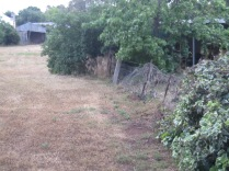 Fence between Cogan's paddock and Becker's yard
