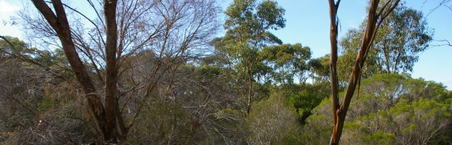 A picture of Watiparinga Conservation Park