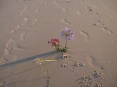On closer inspection, the decoration that was not easily discerned from the path above the beach turns out to be flowers
