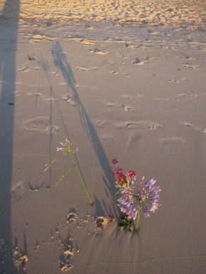 Long ways long shadow